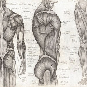 meilleur manuel d'anatomie